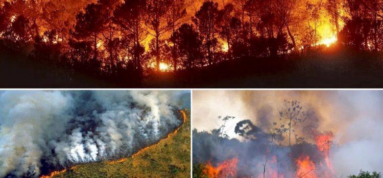 Che cosa sta succedendo in Amazzonia?